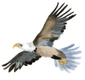 Watercolor illustration of a bird eagle in white background. Royalty Free Stock Photography