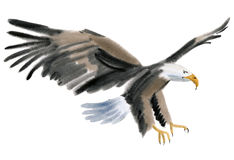 Watercolor illustration of a bird eagle in white background. Stock Photography