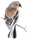 Watercolor illustration of a bird Finch Stock Images