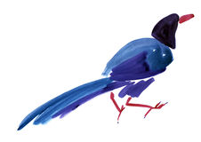 Watercolor illustration of a bird magpie in white background. Royalty Free Stock Image