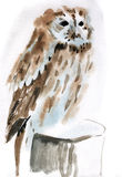 Watercolor illustration of a bird Stock Image