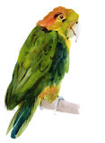 Watercolor illustration of a bird parrot Stock Photography