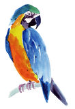 Watercolor illustration of a bird parrot Royalty Free Stock Photo