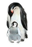 Watercolor illustration of bird penguin and baby in white background. Royalty Free Stock Photos