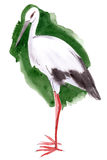 Watercolor illustration of a bird stork Royalty Free Stock Image