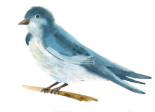 Watercolor illustration of a bird Royalty Free Stock Image