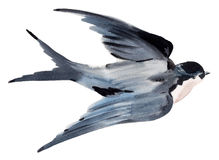 Watercolor illustration of bird swallow Royalty Free Stock Photos
