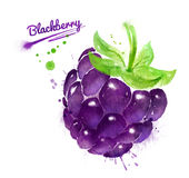 Watercolor illustration of blackberry. And paint smudges and splashes royalty free illustration