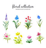 Watercolor illustration with blooming field flowers. Floral collection. Watercolor illustration with blooming field flowers. Watercolor set of herbs and Stock Photo