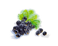 Watercolor illustration of blueberries Royalty Free Stock Image