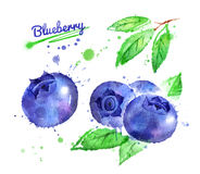 Watercolor illustration of blueberry. And leaf with paint smudges and splashes vector illustration