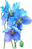 Watercolor illustration of blues poppies isolated on white background. vector illustration