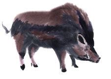 Watercolor illustration of a boar Stock Photos