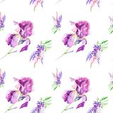Watercolor illustration Botanical lupines and iris flowers isolated on white background. Seamless pattern.  stock illustration