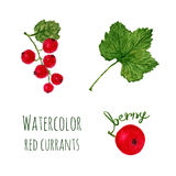 Watercolor illustration with branch of red currant, leaf and berry  on a white background. Vector set Royalty Free Stock Photo