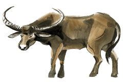 Watercolor illustration of a Buffalo Stock Image