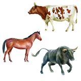 Watercolor illustration, bull, horse and cow. The symbol of the new year, animals on the farm. Watercolor drawing