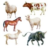 Watercolor illustration, bull, horse, sheep, goat and cow. The symbol of the new year, animals on the farm. Watercolor drawing