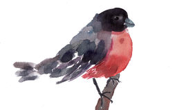 Watercolor illustration of Bullfinch Stock Image