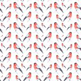 Watercolor illustration of a bullfinch bird sitting on a twig isolated on white background.Seamless pattern stock illustration