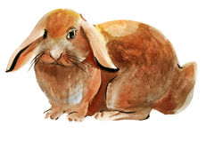 Watercolor illustration of a bunny Royalty Free Stock Photos