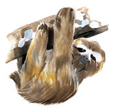 Watercolor illustration of a burgarly sloth in white background. Stock Images