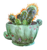 Watercolor illustration Cactus In Flower Pot Royalty Free Stock Photo