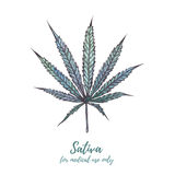 Watercolor illustration cannabis. Cannabis sativa , Cannabis Ind Royalty Free Stock Photo
