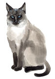 Watercolor illustration of a cat in white background. Handwork watercolor illustration of cat  in white background Royalty Free Stock Photography