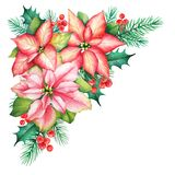 Watercolor illustration of a Christmas bouqet with poinsettia fl stock images