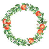 Watercolor illustration of a citrus wreath with orange fruit and leaves. Watercolor illustration wreath of orange and leaves. Can be used as a greeting card for Stock Photo