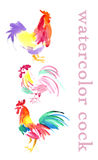 Watercolor illustration of cock  on white back ground. Royalty Free Stock Image