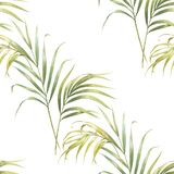 Watercolor illustration of coconut palm leaves, seamless pattern on white royalty free illustration
