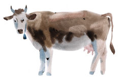 Watercolor illustration of a cow Royalty Free Stock Image