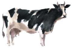 Watercolor illustration of a cow Stock Images