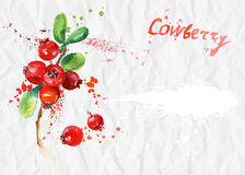 Watercolor illustration. Cranberryon crumpled paper Royalty Free Stock Photography