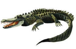 Watercolor illustration of  crocodile Royalty Free Stock Image