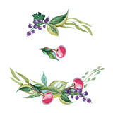 Watercolor illustration of currants, cherry, leaves and wildflow. Decorative elements of currant, cherry, leaves and wildflowers painted in watercolor Stock Photo