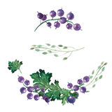 Watercolor illustration of currants, leaves and wildflowers. Decorative elements of currants, leaves and wildflowers painted in watercolor Royalty Free Stock Image