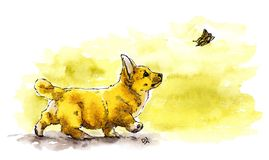 Watercolor Illustration of cute puppy Welsh Corgi Pembroke running after the butterfly.