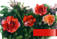 Watercolor illustration depicting the red roses Stock Photos