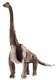Watercolor illustration of dinosaur Brachiosaurus in white background. Royalty Free Stock Photography