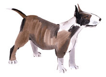 Watercolor illustration of  dog bull terrier  in white background. Stock Image