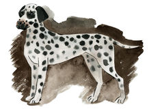 Watercolor illustration of a dog Dalmatian Stock Photos
