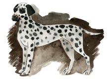 Watercolor illustration of a dog Dalmatian Stock Photos