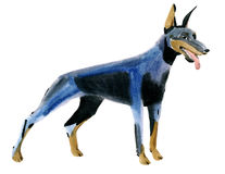 Watercolor illustration of dog Doberman terrier in white background. Stock Image