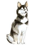 Watercolor illustration of  dog husky in white background. Royalty Free Stock Photos