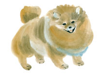 Watercolor illustration of a dog Spitz in white background. Stock Images