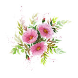 Watercolor illustration of dogrose branch on white background. Rosa canina. Perfect for greeting cards, invitations or other printing project Stock Photography