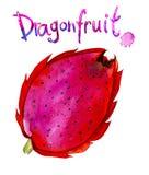 Watercolor illustration of exotic tropical fruit Pitaya, Dragonfruit. Stock Photos
